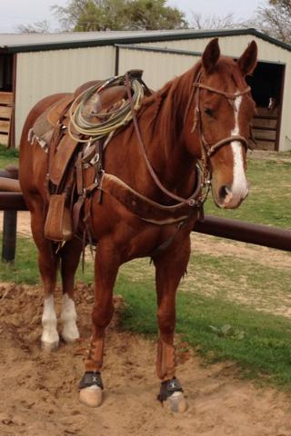 Nice Head Horse