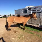 Great Head Horse For Sale