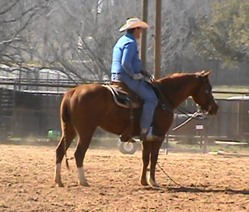 Head Heel Ranch  VIDEO