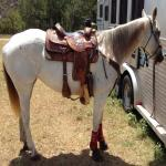 AQHA Very FLASHY Head Horse