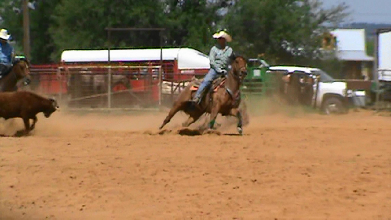 Ranchy Head Horse  VIDEO