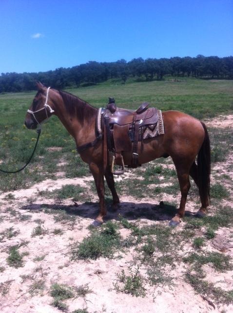 Nice Heel Horse