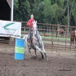 12 Yr Old Gelding, Gentle 16h Gray Barrel and Team Roping Horse