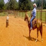 Great Ranch & Roping Horse For Sale