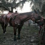 Head Horse For Any Number Roper