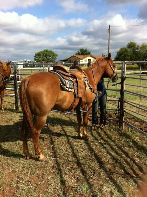 Winning Heel Horse