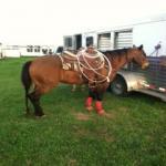Head & Heel Horse