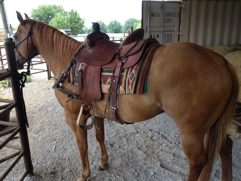 Big stout head horse
