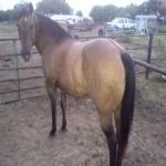 Flashy Head Horse Project