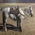 Beginner to Intermediate Head horse