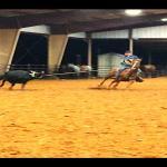 NEXT LEVEL HEAD HORSE
