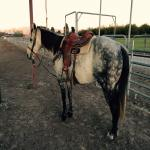 Gentle, Good Looking, and Solid Head Horse SOLD