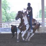 Sound Bomb Proof Head, Heel and Calf Horse