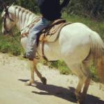 All Around Incrdible Horse