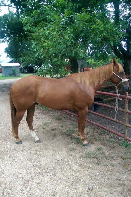 Heel Horse Great Potential