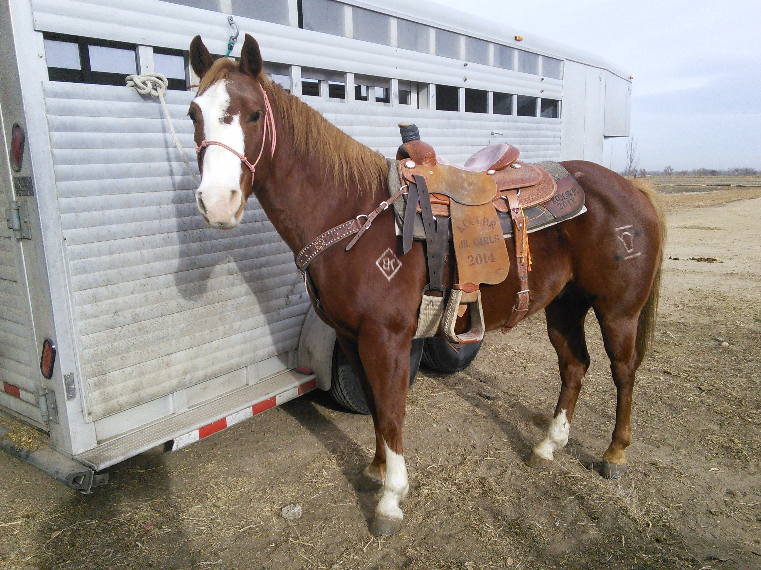 Awesome Heel/Jr Rodeo Horse ****SOLD****